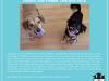 fdf_adoptionflyer_cheechtimber-jpg