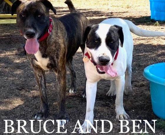 Ben & Bruce