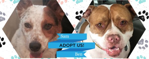 Ben & Sam – Adopt Us!