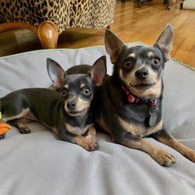 Layla & Lulu